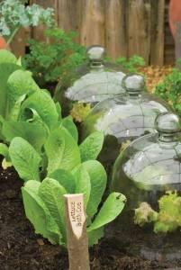 salad-greens jpg