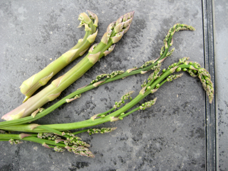 wild-asparagus-fort-collins